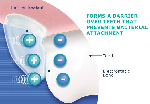 graphic explaining how dental hygiene chews form a barrier over teeth that prevents bacterial attachment
